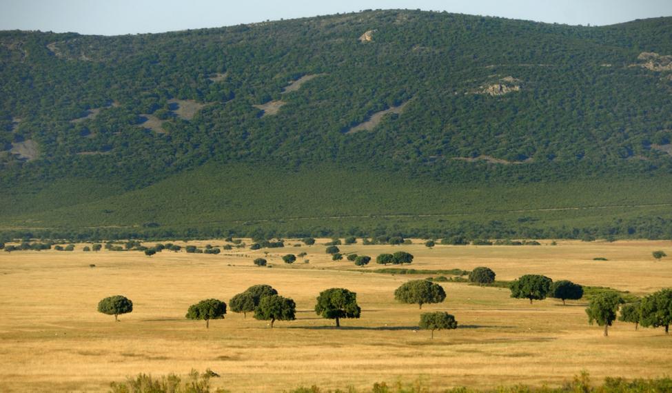 Parque Nacional de Cabañeros en Toledo