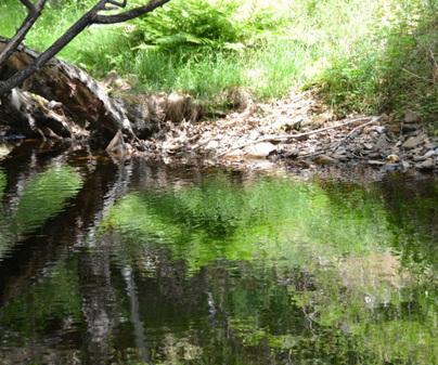 Reserva Fluvial del Río Pelagallinas