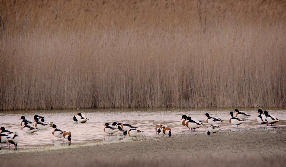Laguna de la Albardiosa