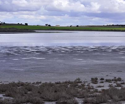 Lagunar de Salicor