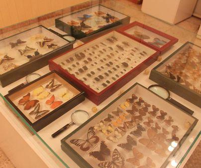 Museo de las Ciencias Naturales AVAN