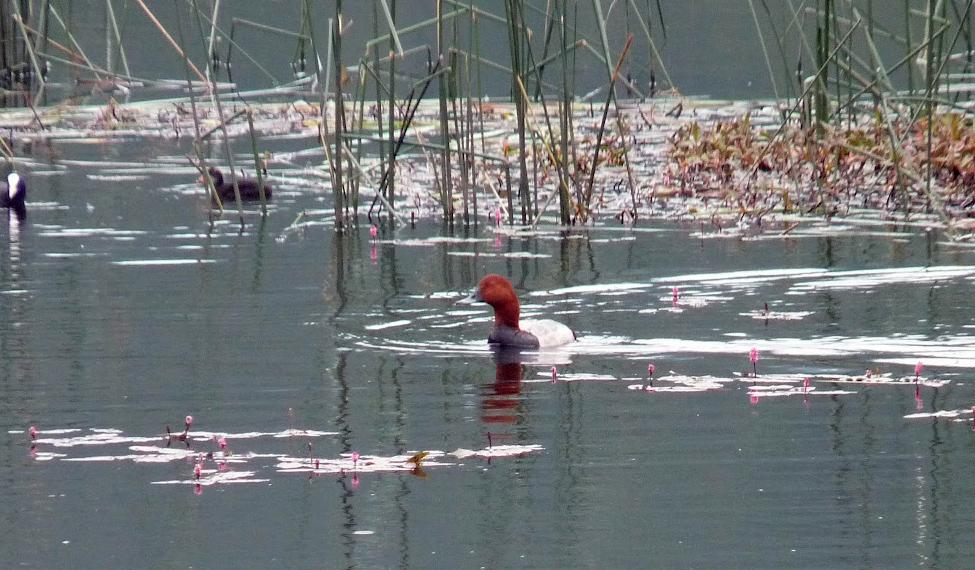 Laguna de Talayuelas