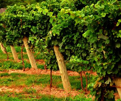 Bodega Virgen de las Viñas