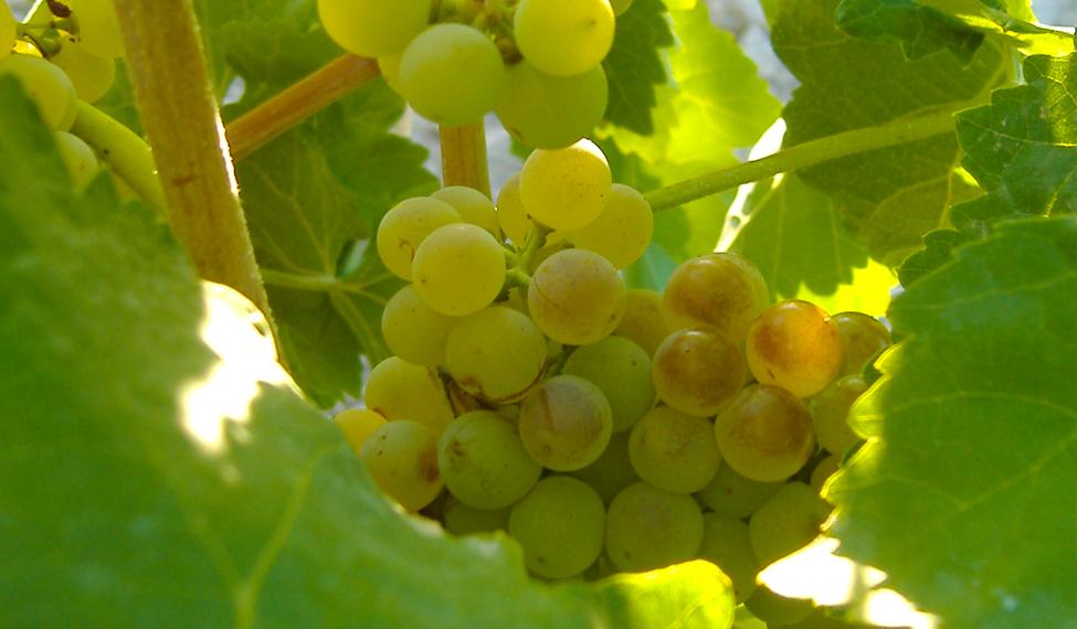D.O. Vino de Valdepeñas