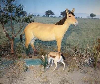 Museo Provincial de Ciudad Real - Fauna paleolítica