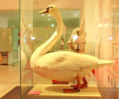Museo Ciencias Naturales Los Yébenes - 2