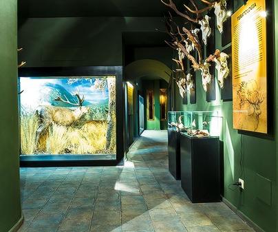 Museo de la Caza y la Naturaleza 2