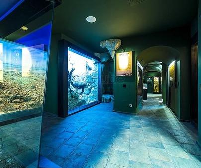 Museo de la Caza y la Naturaleza 3