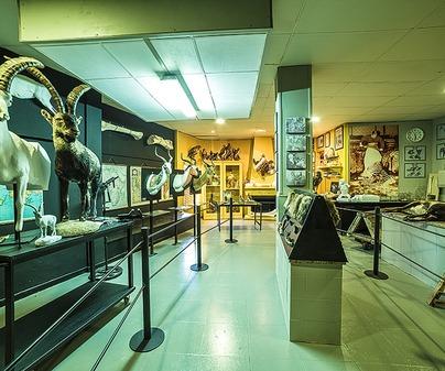 Museo de la Caza y la Naturaleza 4