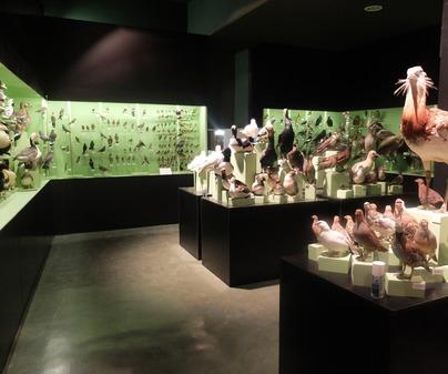 Museo de la Caza y la Naturaleza 6