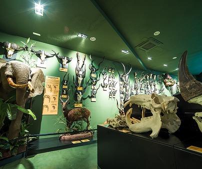 Museo de la Caza y la Naturaleza 7