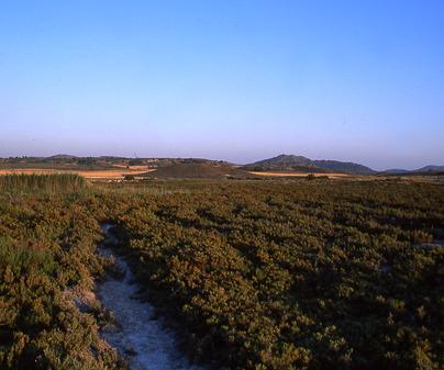 Saladar de Cordovilla