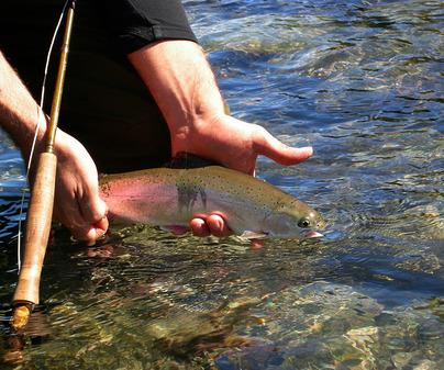 Pesca libre