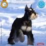 Exposición Internacional Canina