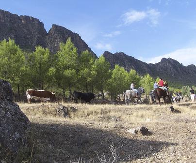 Encierros de Elche de la Sierra
