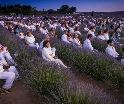 Festival La Lavanda