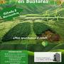 BELLOTADA BUSTARES