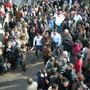 Fiesta de la Vaca de San Pablo de los Montes. Declarada de Interés Turístico Regional.