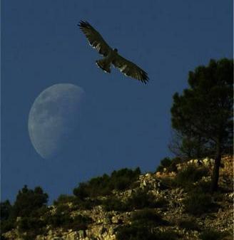 E.T.A. Ruideractiva - Observación de aves