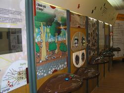 Museo Micológico La Casa del Níscalo, en Molinicos